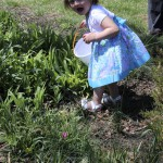 Easter Egg Hunting on the Lawn